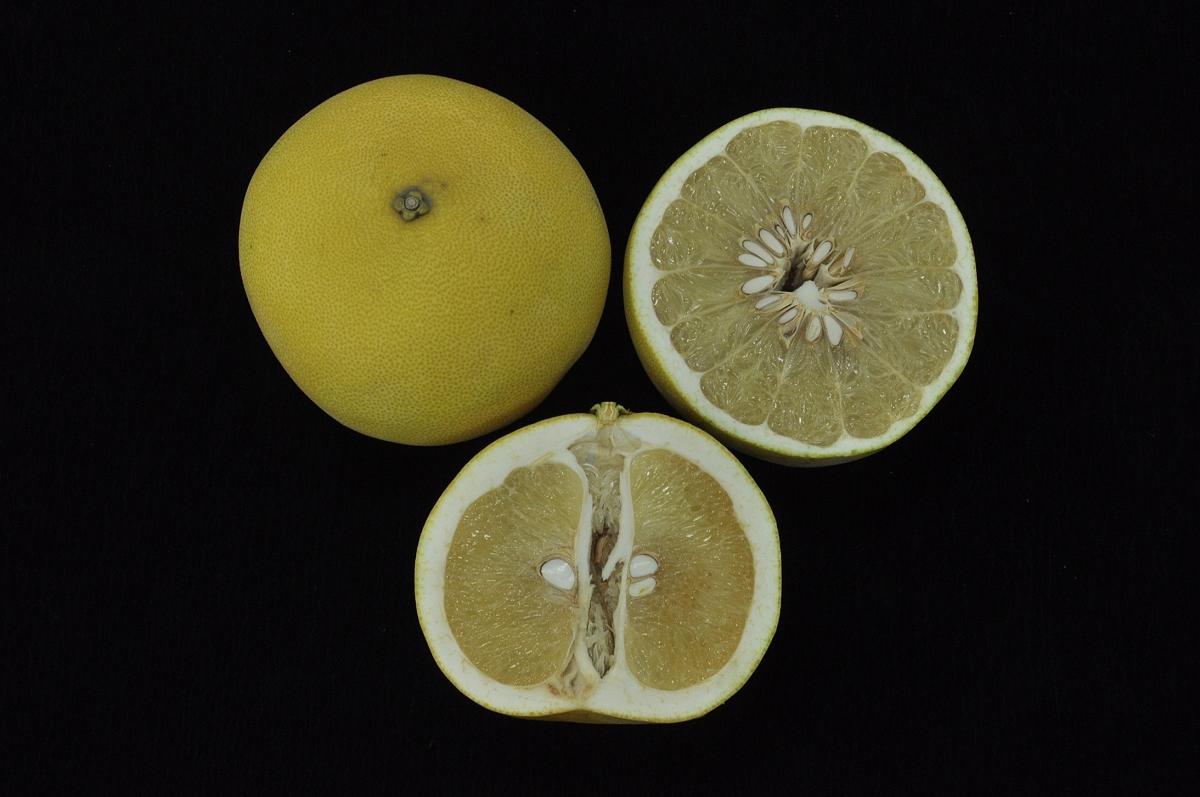美味、多汁大白柚,甜酸恰好正對時!