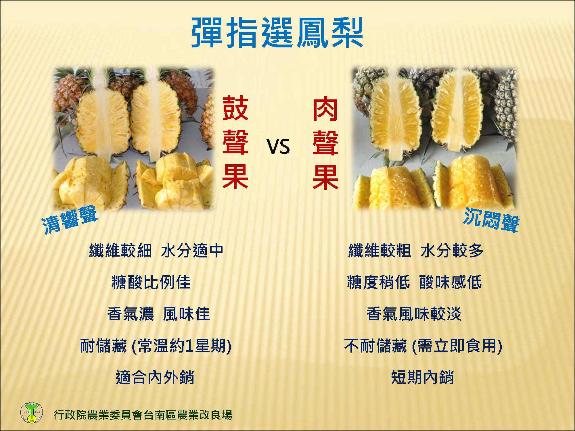 鳳梨香甜好滋味 臺南區農業改良場挑選秘訣大公開