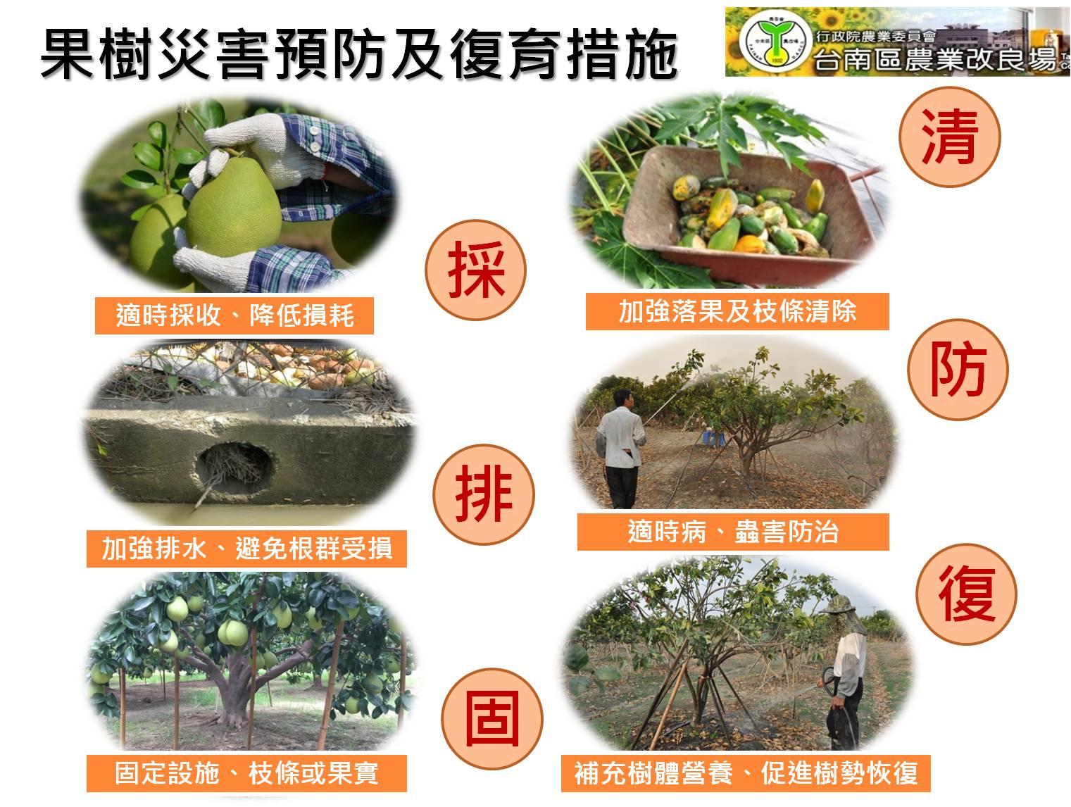 果樹災害預防及復耕措施