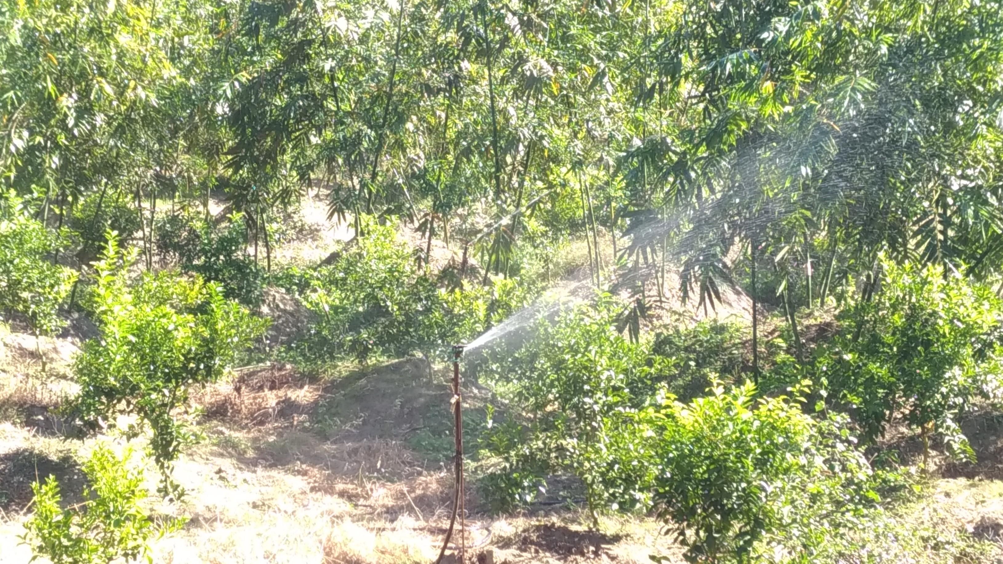 噴灌於坡地有效發揮灌溉作用