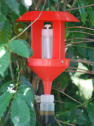 A trapping device to control coffee berry borer