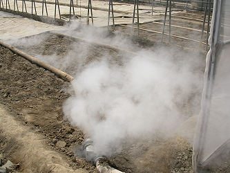 Soil steaming to control soil-borne diseases and pests