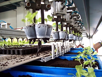 Small tray transplanter for tray vegetables